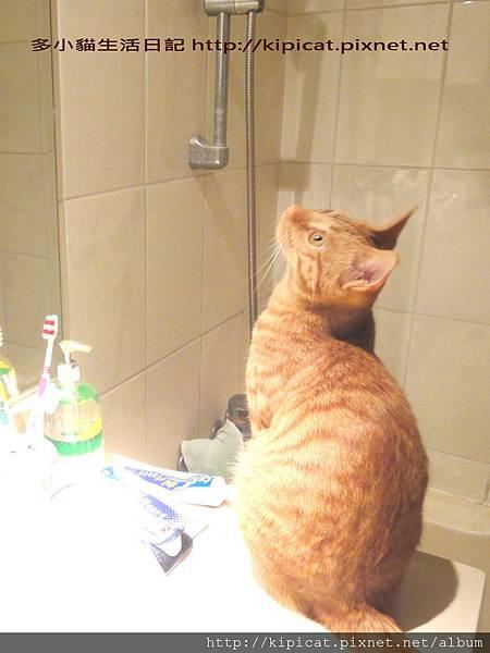 多多在浴室(多小貓生活日記)