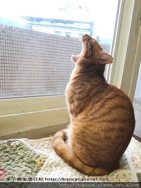 多小貓狂吼(多小貓生活日記)