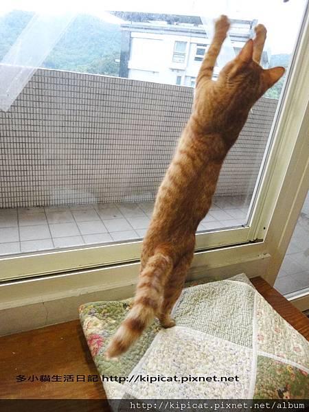 多小貓跳舞狂歡(多小貓生活日記)