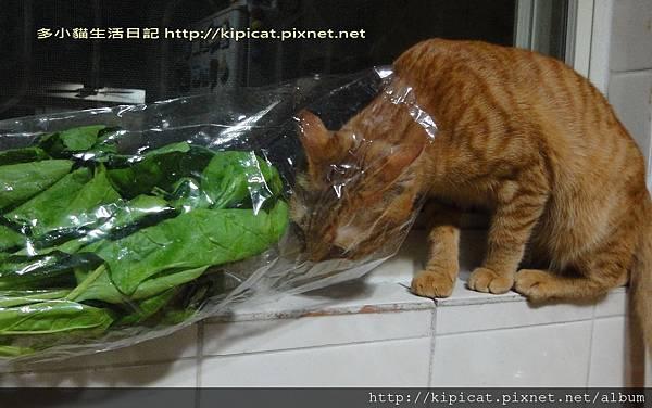 多小貓嚐鮮蔬(多小貓生活日記)
