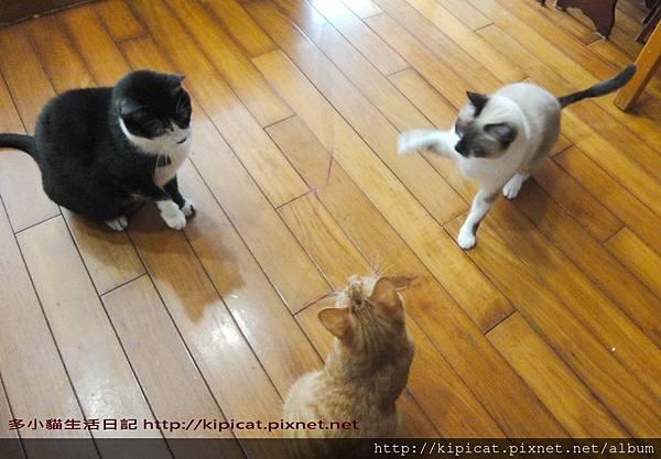當我們玩在一起(多小貓生活日記)