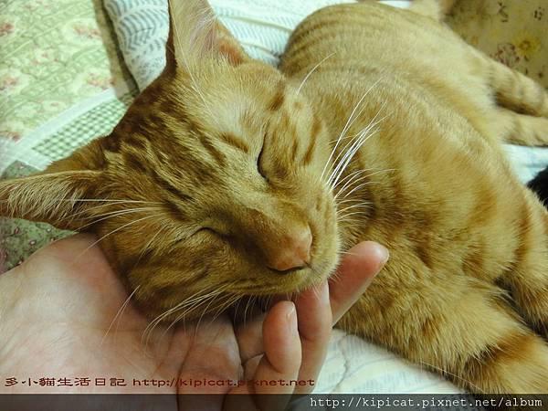 多小貓玩累了睡覺覺(多小貓生活日記)