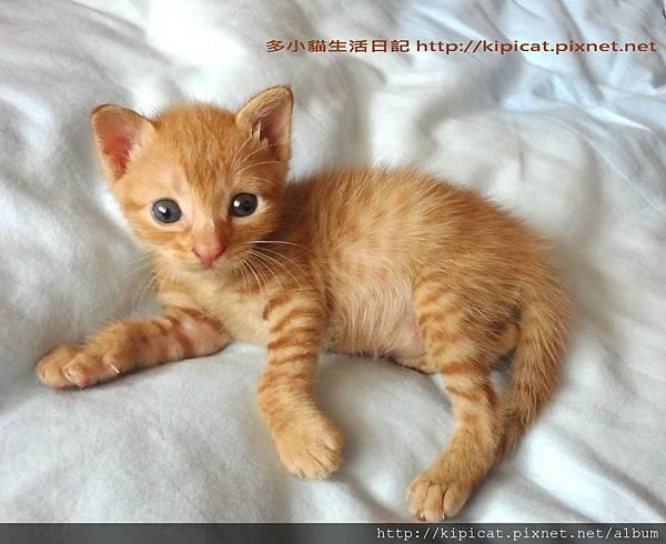 多小貓對鏡獨照1(多小貓生活日記)