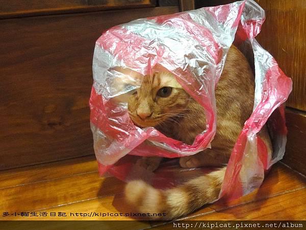 多小貓玩塑膠袋(多小貓生活日記)