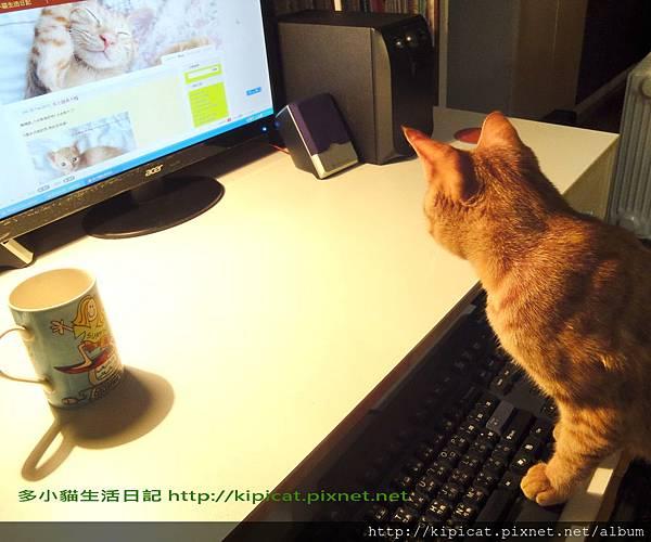 多小貓打日記(多小貓生活日記)