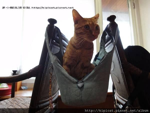 多小貓盪鞦韆1(多小貓生活日記)
