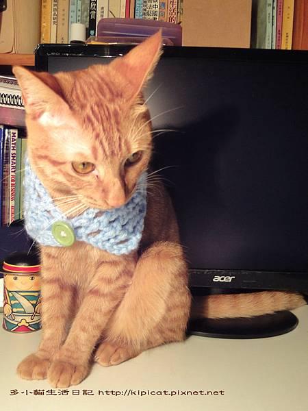 多小貓有條新圍巾(多小貓生活日記)