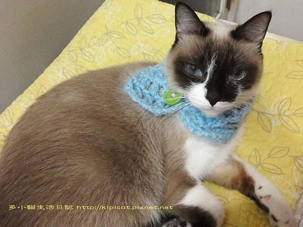 妮妮有條新圍巾(多小貓生活日記)