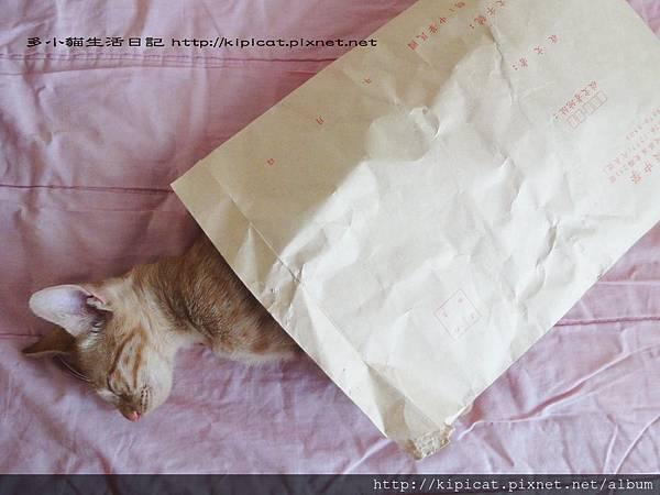 多小貓睡牛皮紙袋(多小貓生活日記)