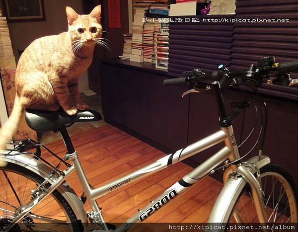 多多想騎腳踏車(多小貓生活日記)