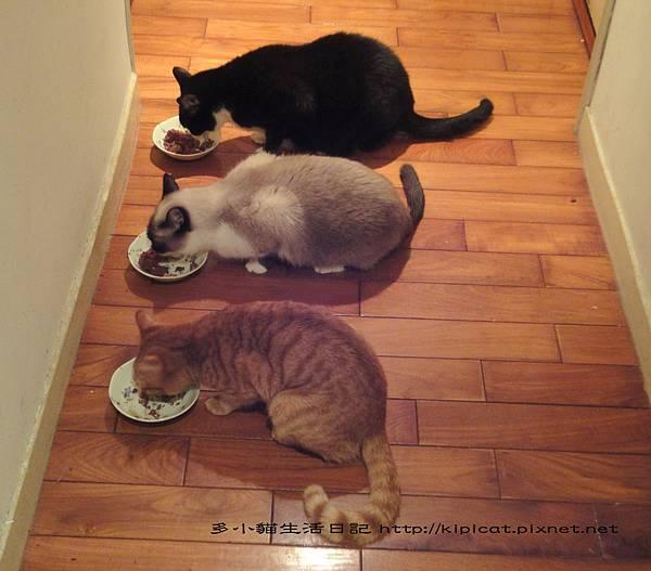 排隊吃大餐(多小貓生活日記)