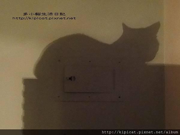 多小貓的影子(多小貓生活日記)