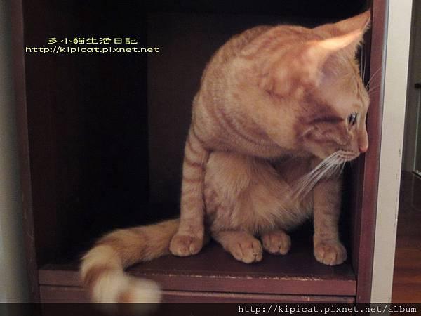 多小貓躲妖怪2(多小貓生活日記)