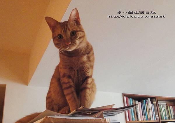 多小貓觀察媽媽動作(多小貓生活日記)