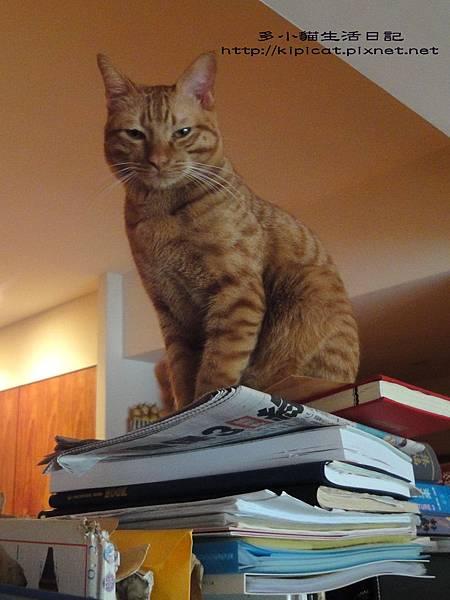 多小貓爬書架1(多小貓生活日記)