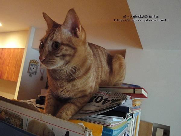 多小貓翻書被發現(多小貓生活日記)