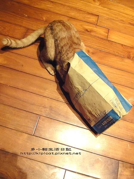 看看袋子裡有甚麼(多小貓生活日記)