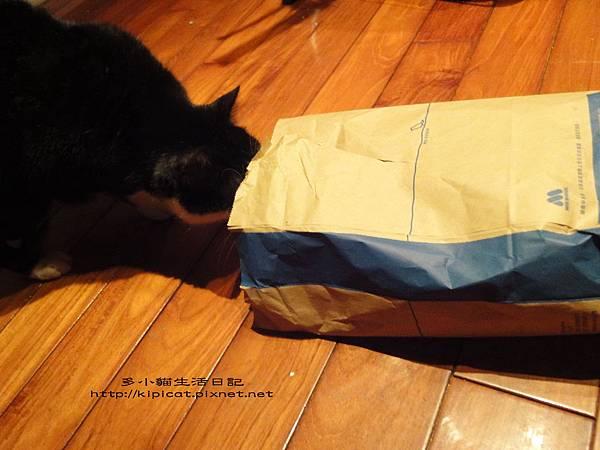 皮哥看紙袋裡有甚麼(多小貓生活日記)