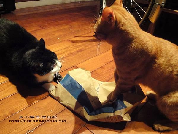 多小貓與皮哥的紙袋大戰(多小貓生活日記)