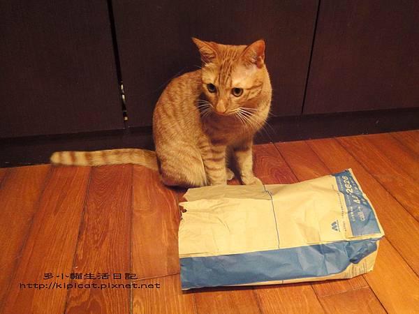 多小貓發現摩斯紙袋(多小貓生活日記)
