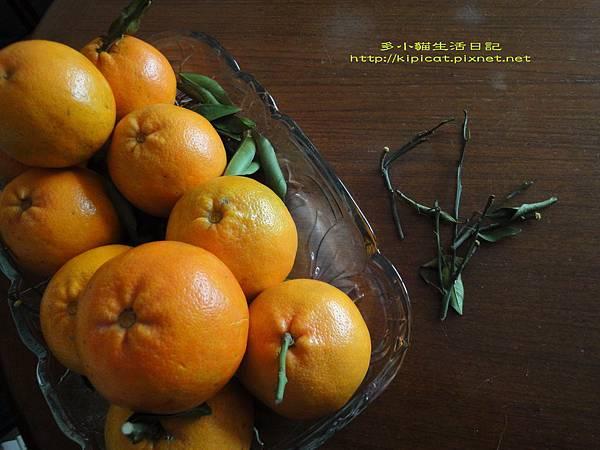 橘子梗比較好吃(多小貓生活日記)