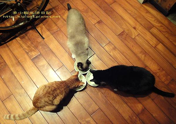 多小貓和皮哥妮姐的團圓飯(多小貓生活日記)