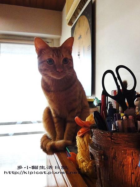 察言觀色多小貓(多小貓生活日記)