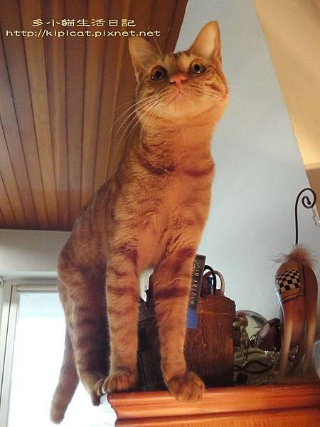 察言觀色多小貓2(多小貓生活日記)