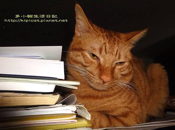 看書打瞌睡的多小貓(多小貓生活日記)
