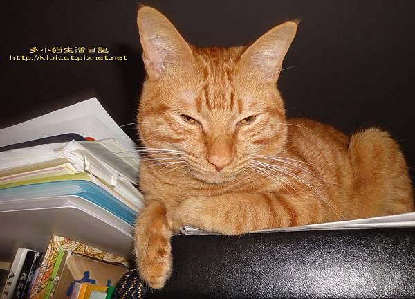 看書打瞌睡的多小貓2(多小貓生活日記)