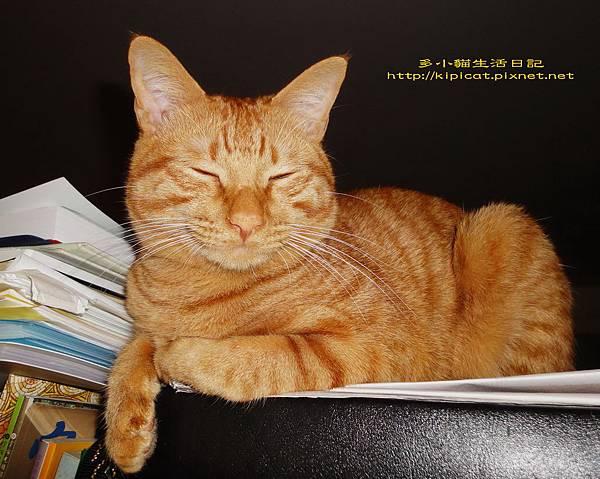 看書打瞌睡的多小貓3(多小貓生活日記)