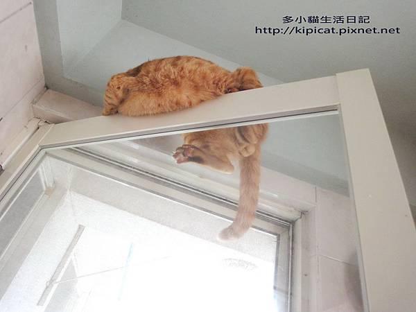 爬門容易下來難(多小貓生活日記)
