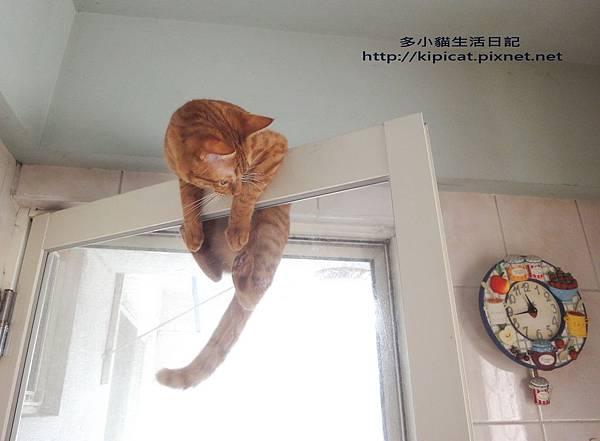 救命 我要掉下來啦(多小貓生活日記)