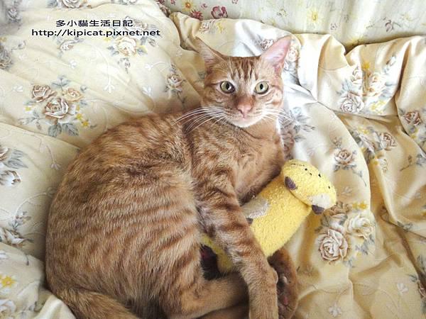多小貓的喵寶貝(多小貓生活日記)