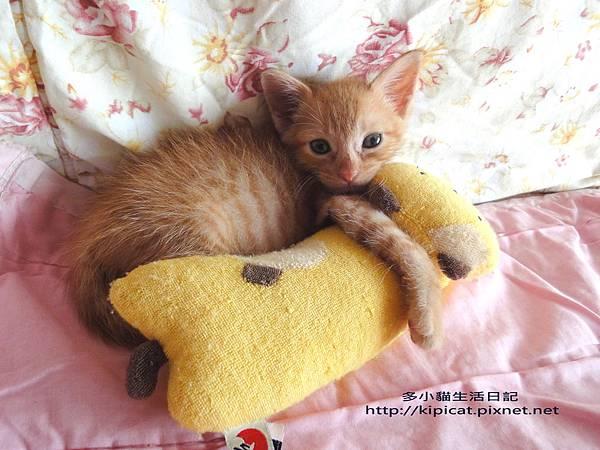baby多小貓的喵寶貝(多小貓生活日記)