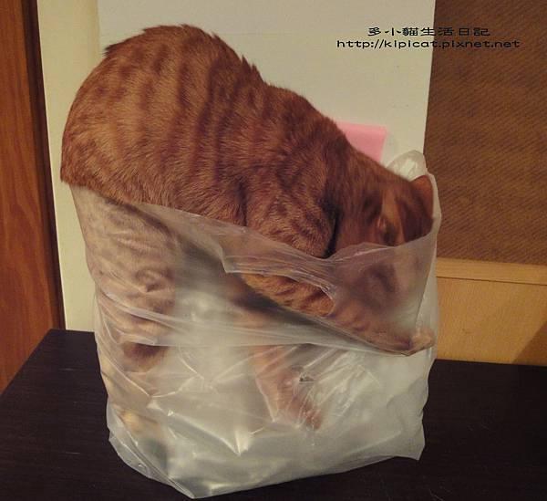 太擠啦(多小貓生活日記)