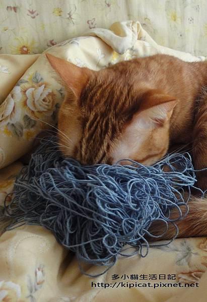 埋在毛線裡的多小貓(多小貓生活日記)
