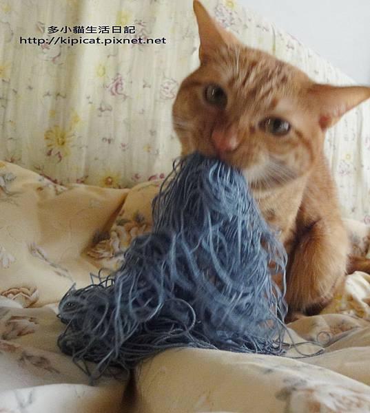 多小貓咬毛線(多小貓生活日記)