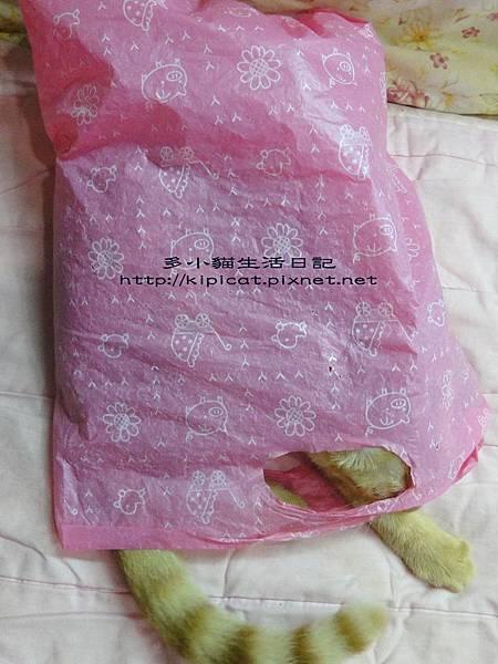 多小貓睡塑膠袋(多小貓生活日記)