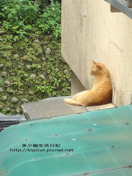 多小貓的喵妹妹(多小貓生活日記)