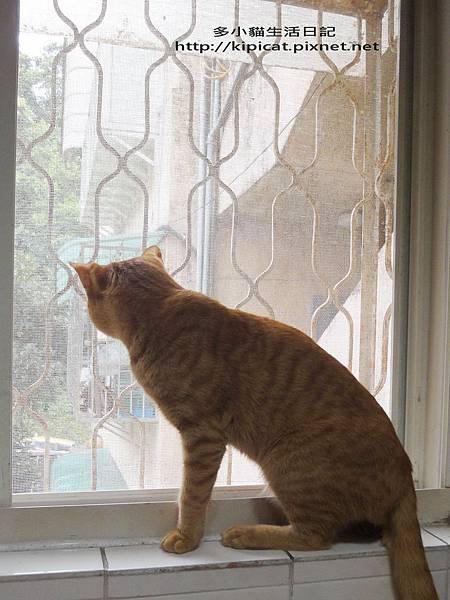 多小貓看窗外貓妹妹(多小貓生活日記)