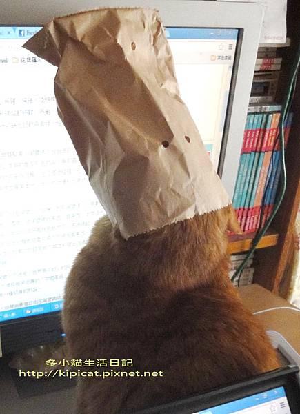 頭戴3K黨頭套的多小貓(多小貓生活日記)