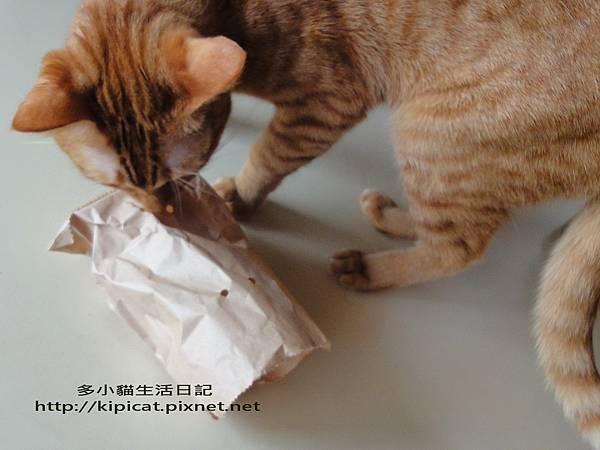 好奇多小貓玩紙袋(多小貓生活日記)