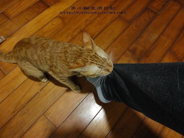 媽媽趕快來(多小貓生活日記)