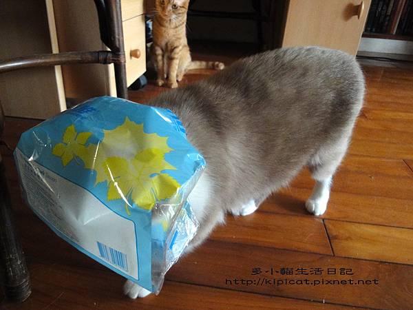 多多偷看妮妮戴塑膠袋(多小貓生活日記)