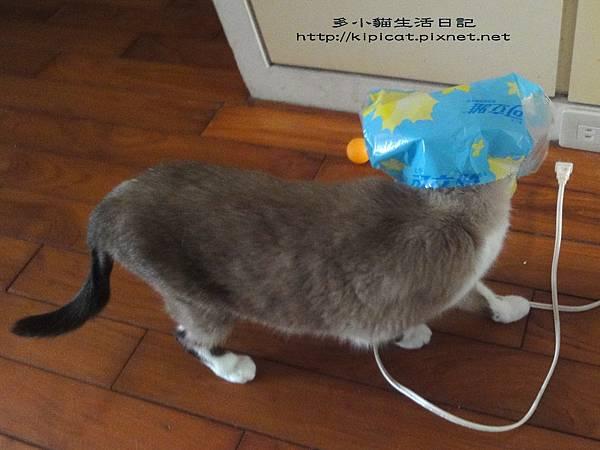 妮妮戴塑膠袋(多小貓生活日記)