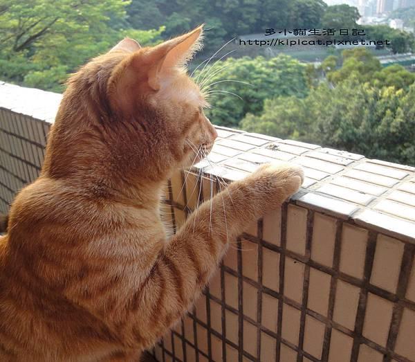 多小貓獨照2(多小貓生活日記)