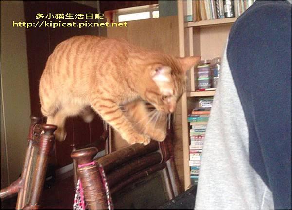 爸爸我來了(多小貓生活日記).jpg