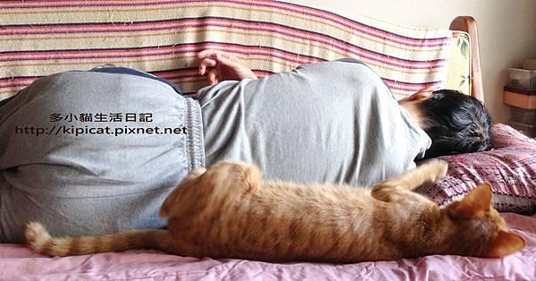 爸爸怎麼睡多小貓就怎麼睡(多小貓生活日記).jpg