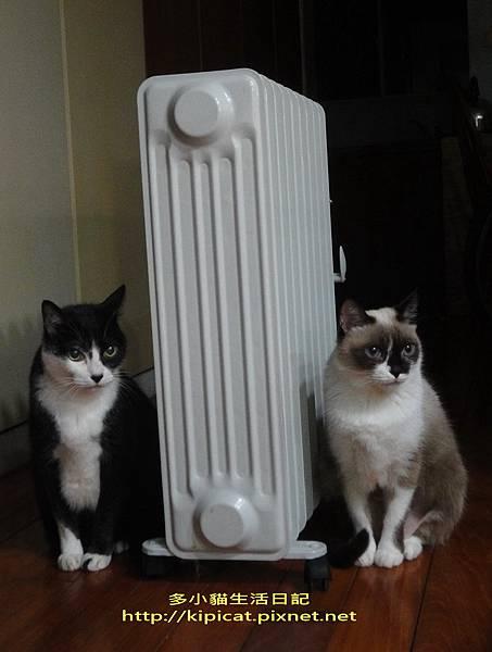 皮皮妮妮吹暖氣3(多小貓生活日記)